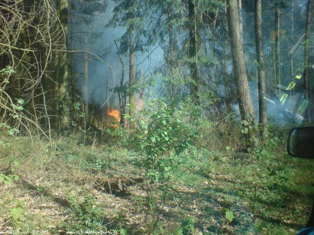 1. Waldbrand so früh wie nie – Brennendes Waldstück im Rüenberger Wald