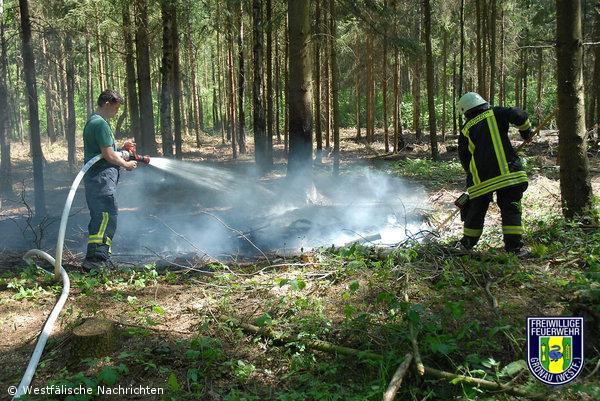 Erste Waldbrände dieses Jahres – Unterholz brannte
