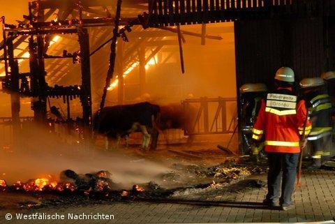 Viehstall in Gronau abgebrannt – 120 Tiere entkommen den Flammen