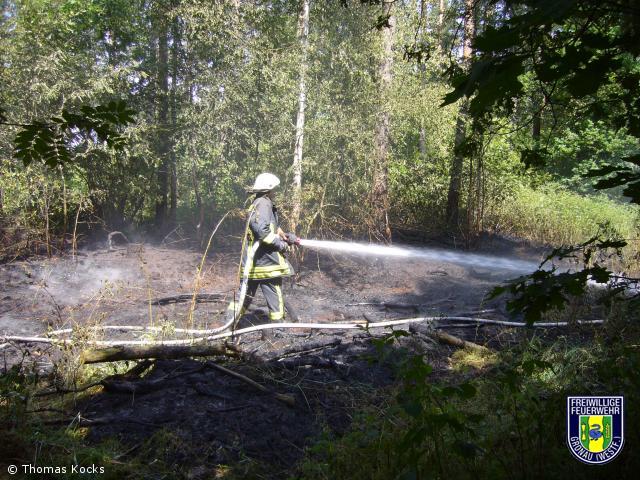 Brennen ca. 200qm Unterholz