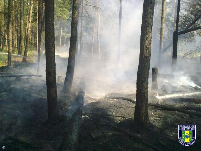 Feuer-Wald