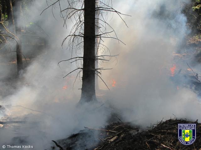 Feuer-Wald brennt Unterholz