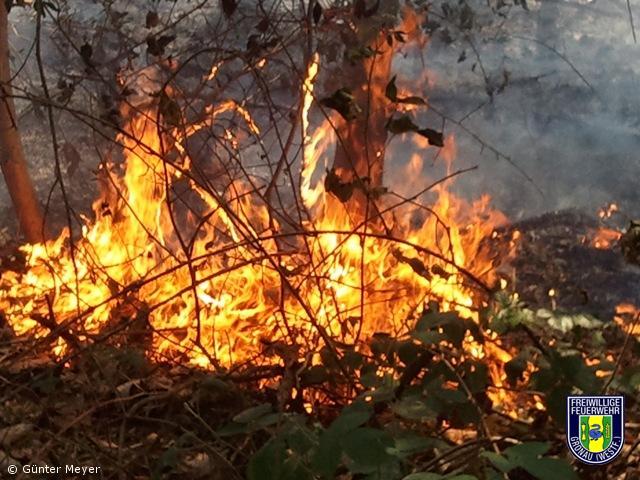 Feuer-Wald – 200qm Unterholz und Grasnarbe am Schöttelkotter Damm