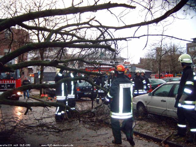 Kastanienbaum stürzt auf PKW