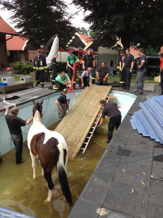 Feuerwehr rettete Pferd aus Swimmingpool