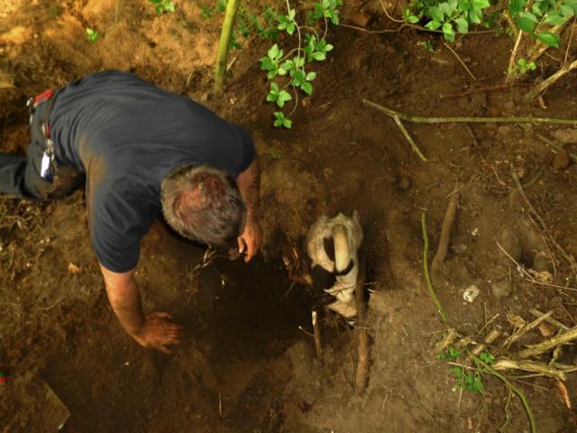 Feuerwehr befreit Hund aus Kaninchenbau
