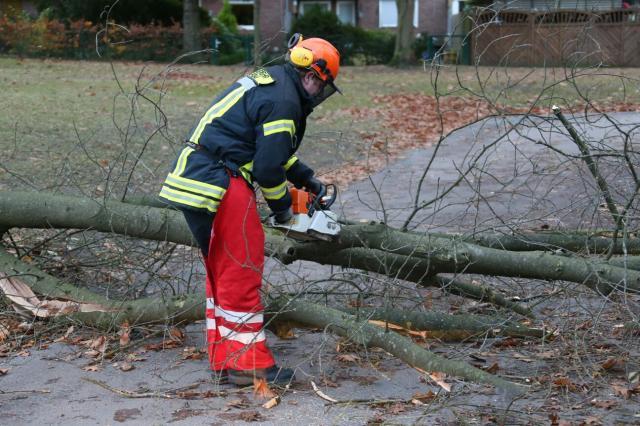 Mehrere Bäume hielten Sturm Nannette nicht stand