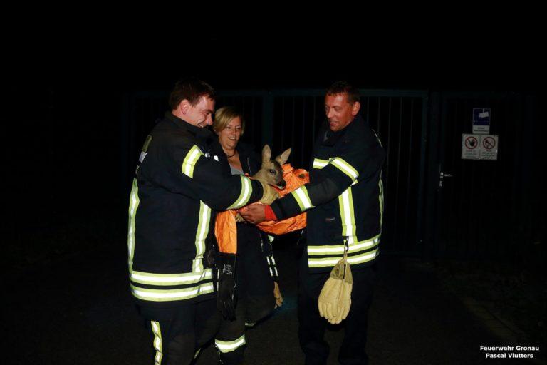 Feuerwehr rettet Rehkitz aus Notlage