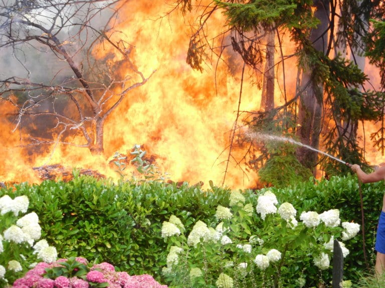 """Aus """"Brennt Baum"""" wurde Großbrand"""