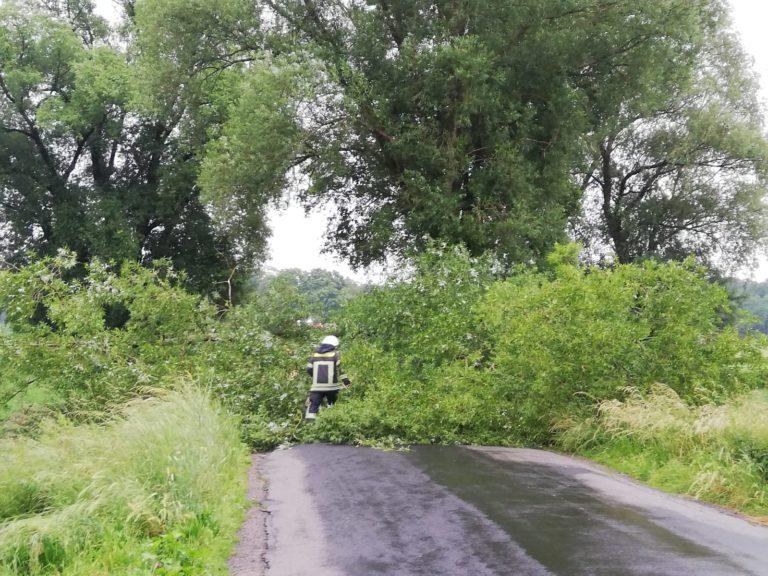 Baum stürzte auf Fahrbahn
